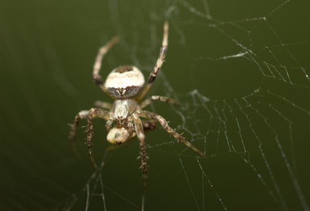 spider on the nature photo