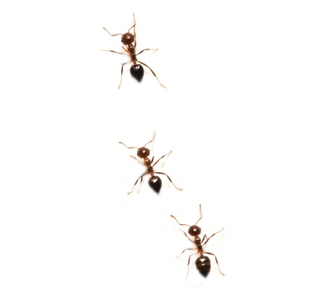 interesting: ants on a white background. macro