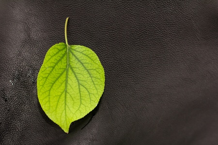 green leaf on a black leather background. macro Stock Photo - 20532638