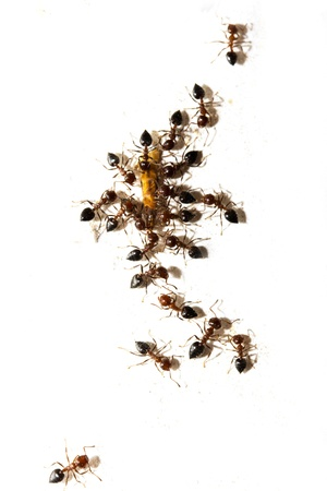 similitude: ants on a white wall