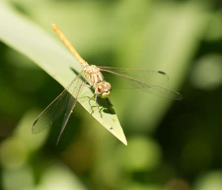 damselfly: dragonfly in nature. macro