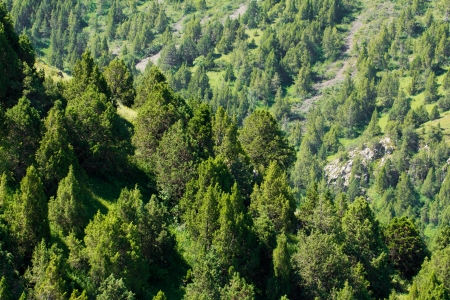 slopes of the mountains with trees in Kazakhstan photo