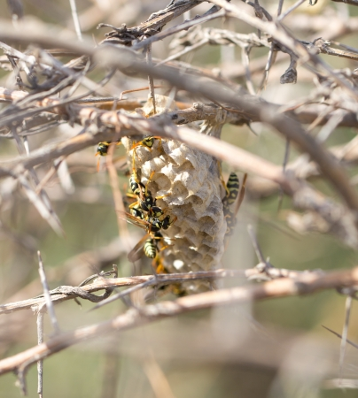 wasps in nature. macro photo