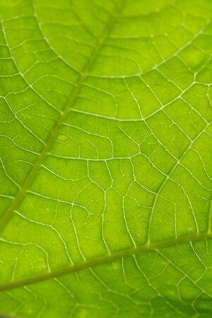 beautiful green leaf in nature. macro photo