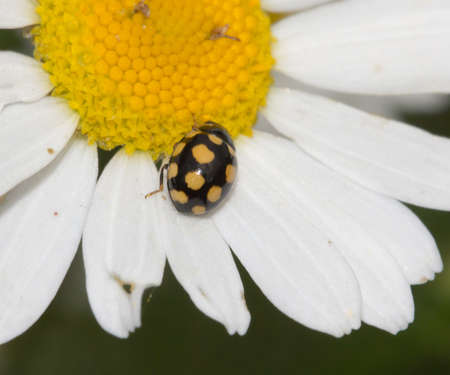 small beetle in nature. macro photo