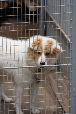 portrait of a dog behind bars photo