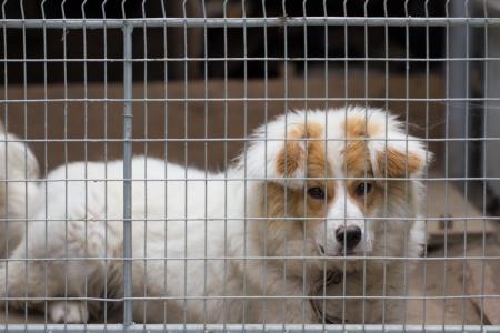 enclosures: portrait of a dog behind bars