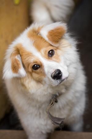 heeler: portrait of a dog Stock Photo
