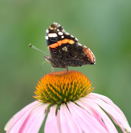 beautiful butterfly on a flower in nature photo