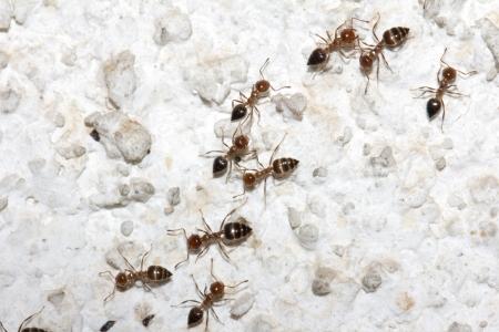 ants on the wall. macro photo