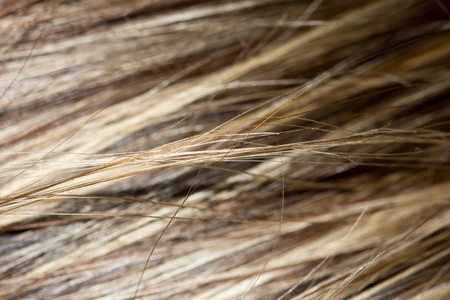highlighted hair: background Streaked hair. macro