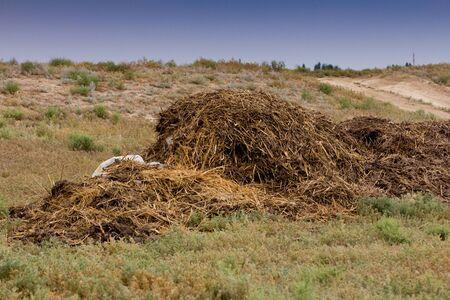 enrich: humus manure with grass