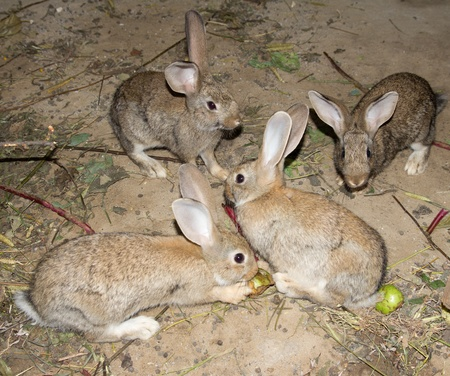 rabbits photo