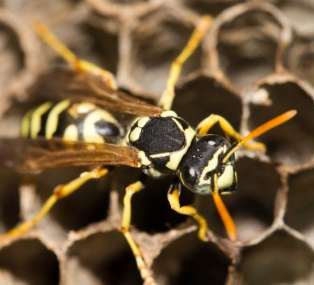 櫛上ハチ 写真素材