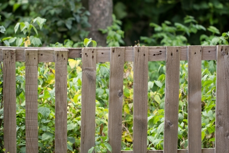 old wooden fence on the nature photo