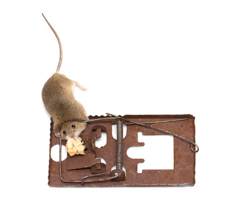 mouse in a mousetrap on a white background photo