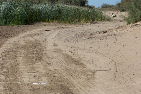 footprints in the sand on cars photo