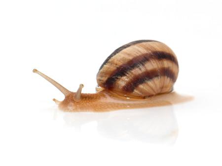 land slide: snail on a white background. macro