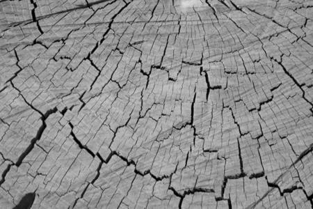 Dark brown tree trunk texture or background photo