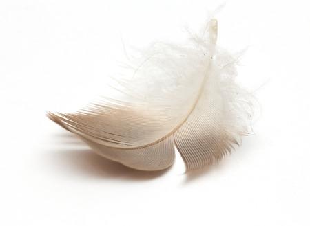 흰색 배경에 깃털. 매크로