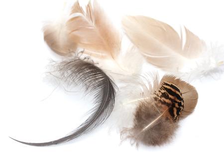dappled: feather on a white background. Macro