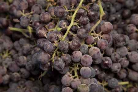 black grapes as background photo