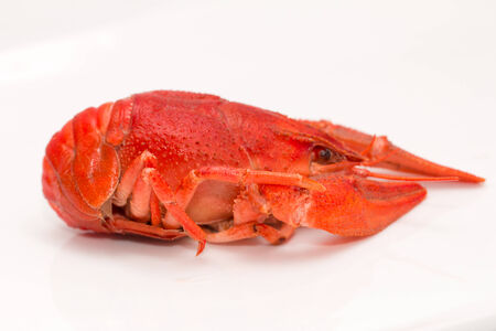 red crayfish on a white background photo