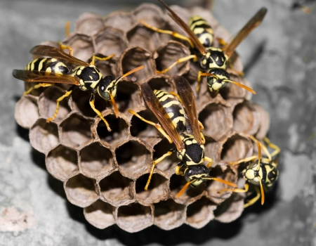 stinger: Wasps in the nest