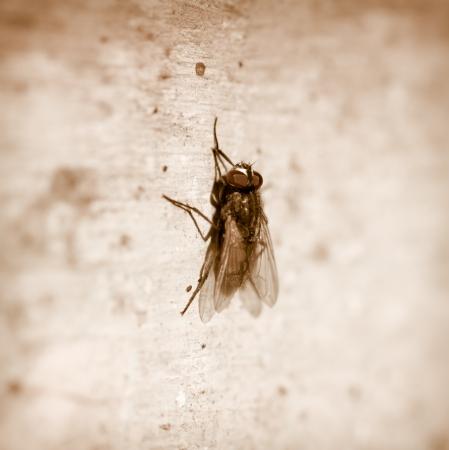 fly. macro
