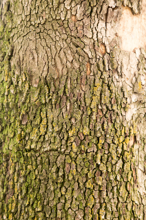 tree bark as background photo