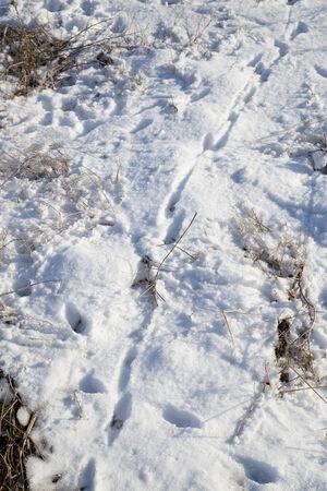 spoor: spoor in the snow Stock Photo