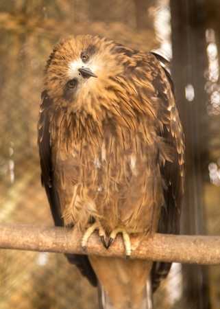 hawk in the park outdoors photo