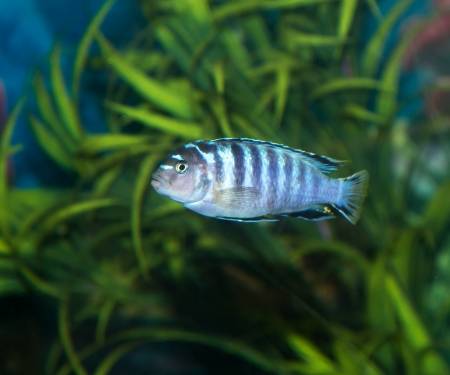 fish in the aquarium Stock Photo - 25229041