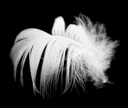 weightless: feather on a black background Stock Photo