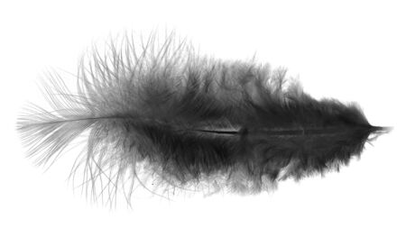 Black feather on a white background photo
