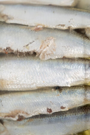 beheading: sprats in oil Stock Photo