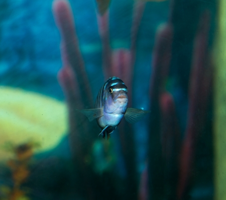 fish in the aquarium photo