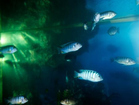 fish in the aquarium Stock Photo - 25801604