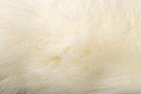 pelage: background of white fur