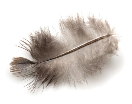 feather on white background photo