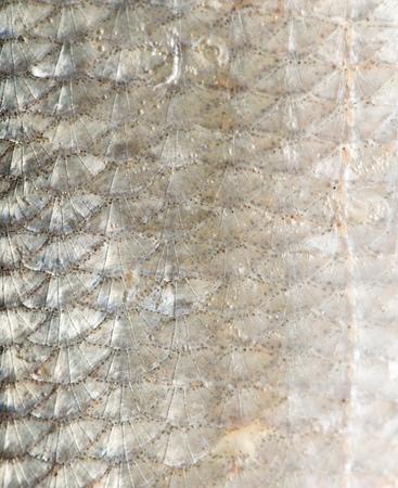 rutilus: background of fish scales. macro Stock Photo