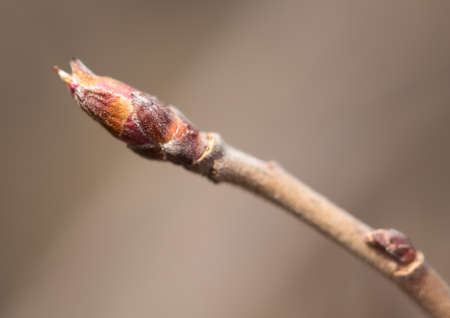 buds on the tree. macro photo