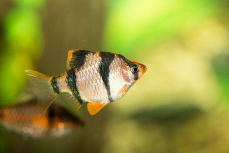 fish in the aquarium photo