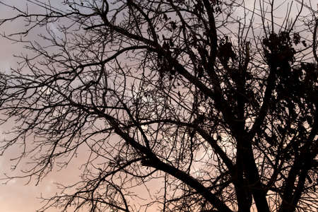 bare branches of a tree at sunset photo