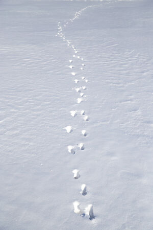 dint: footprints in the snow