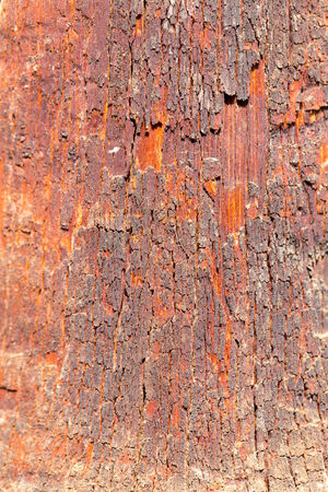 floor covering: old wooden background