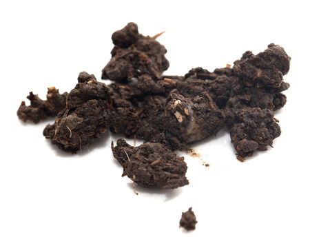 soil on a white background photo