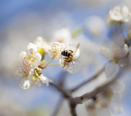 bee on flowers on a tree photo