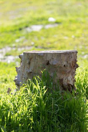 stump on the nature photo