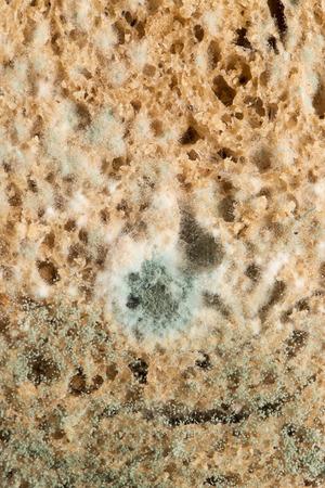 bread mold: mold on bread. macro